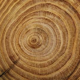 Tecnologia forestale